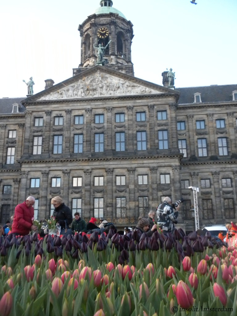 ia_festa nazionale dei tulipani