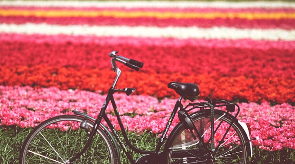 primavera ad amsterdam