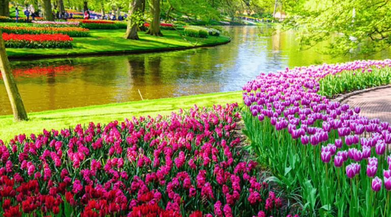 pasqua ad amsterdam_parco tulipani