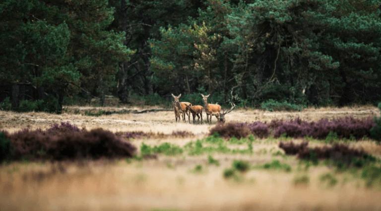 parchi nazionali olandesi_pic shuttertock_